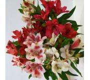 Kwiaty Ciete 1 Kwiaciarnia Internetowa Zielony Zakatek U Basi Kwiaciarnia Krosno